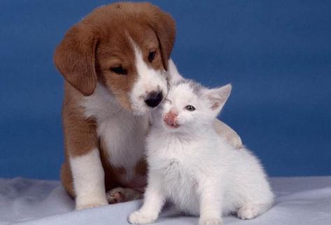 familia-animales_de_compania-terapia-positivo-enfermos-alzheimer_PREIMA20110319_0093_5